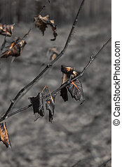 burnt leaves on small tree after forest fire