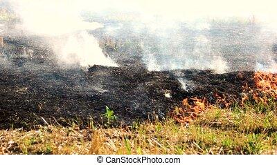 Black burnt smoldering field. Spreading fire on dry grass...
