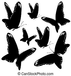 black butterflies,isolated on a white