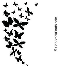 black butterfly, on a white