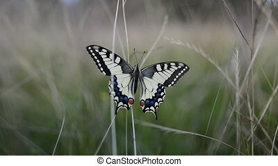 Black butterfly with flowers and with green leaves.