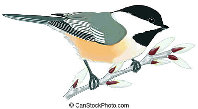 chickadee illustrations and clipart 233 chickadee royalty free rh canstockphoto com black capped chickadee clipart black capped chickadee clipart
