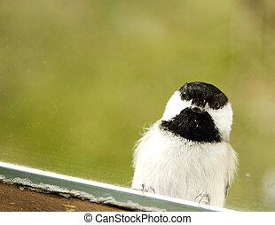 Black Capped Chickadee Windowsill