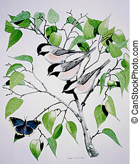 Black-capped Chickadees and butterfly