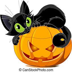 A cute black cat lying on a pumpkin.