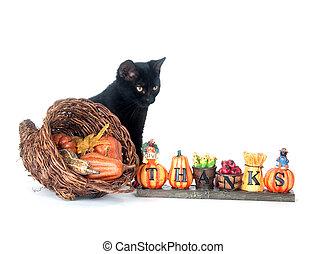 Black cat and cornucopia - A black cat sitting next to a...