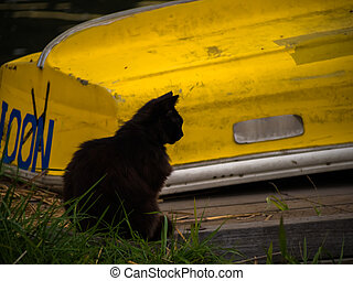 Black cat and the yellow boat