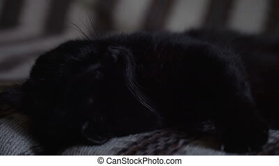 Black cat asleep on the sofa close-up.