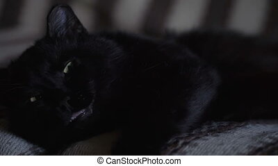 Black cat asleep on the sofa close-up.