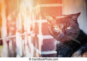 Black cat at home.