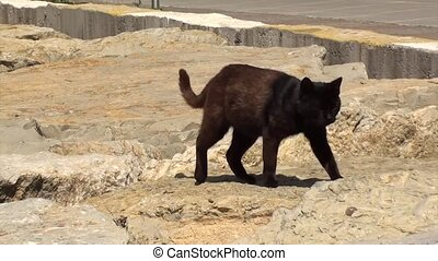 Black cat at the seaside - A street dirty black cat with...