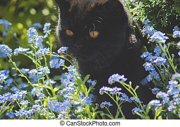 black cat between flowers