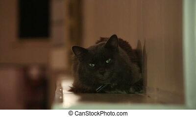 Black cat blinking eyes