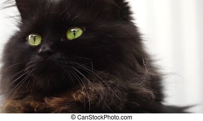 Black cat close up and sunlight - black cat close up and...