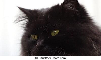 Black cat close up and sunlight - black cat close up and...