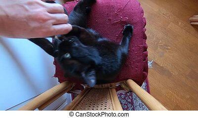 black cat cutting nails - SLOW MOTION: cutting claws to a...