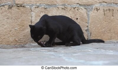 Black cat eating a fish - Black cat eating a dead fish in...