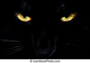 Wild black cat eyes coming out of the dark