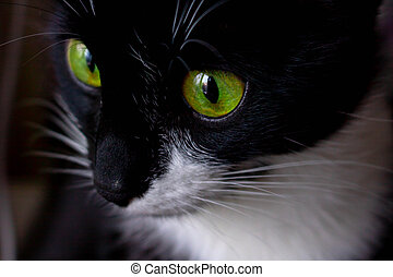 Black cat girl with green eyes close up.