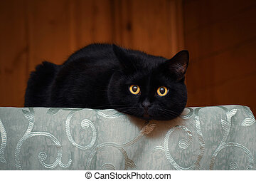 black cat in country house