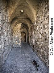 black cat in jerusalem israel