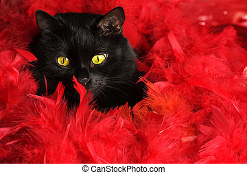 Black cat in red feathers - Studio shot of black cat sitting...