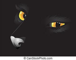 Black cat in the dark