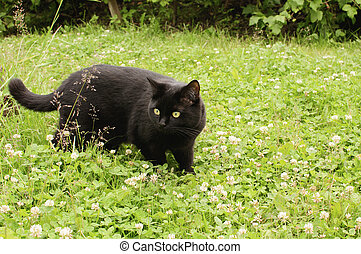 black cat in the green grass