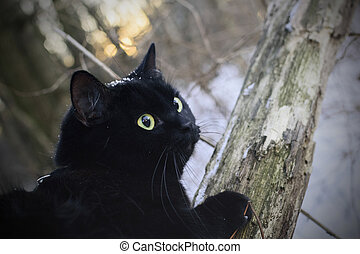 Black cat in winter forest