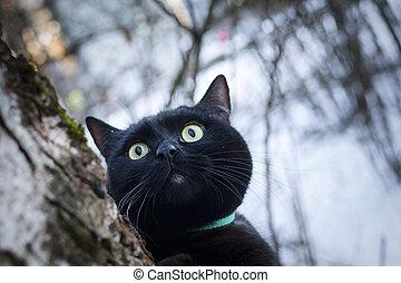 Black cat in winter forest