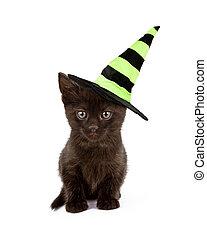 Black Cat in Witch Hat - A cute black kitten wearing a green...