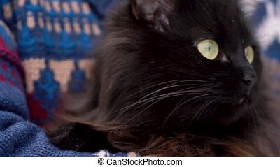 Black cat is held on its hands outdoors in the winter, with...