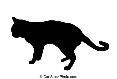 black cat isolated on a white