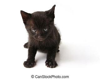 Black cat kid - Little black cat on white