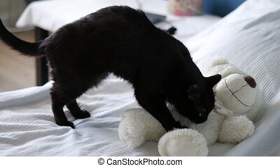 black cat kneading on a bear soft toy, totally zoned out and blissful, 4k uhd 2160p
