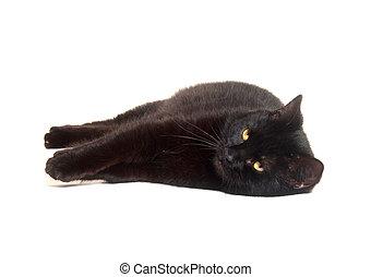 Black cat laying down