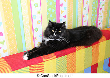 Black cat laying on colored back of sofa. Domectic animal...