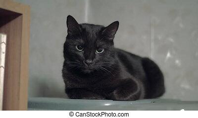 Black cat lying near shelf - Cute cat with black fur lying...