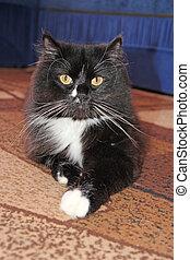 Black cat lying on floor. Feline muzzle. Curious snout