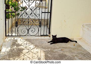 Black cat lying on the ground.