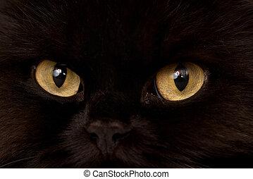 Macro close-up photo of a black cat yellow eyes