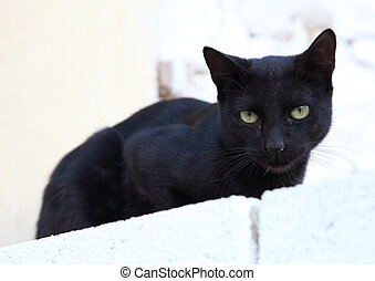 Black cat on a white wall