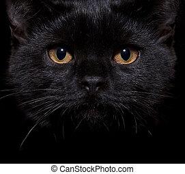black cat on black