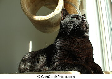 black cat on cat tree with sunlight