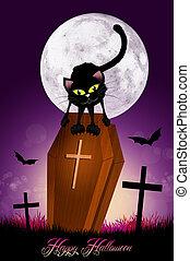black cat on coffin