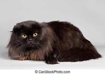 Black cat on grey background