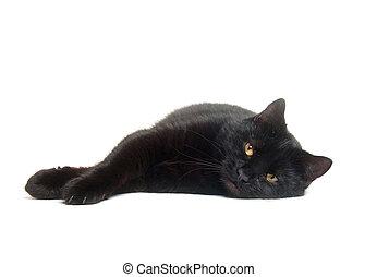 Black cat on white