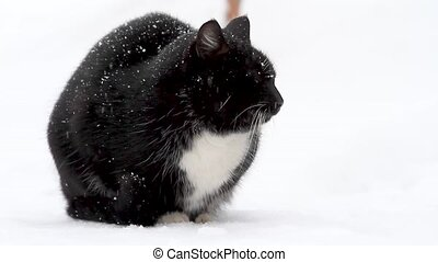 black cat on white snow, pets, bad weather and frost