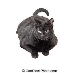 black cat over white