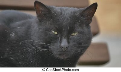 black cat. portrait hungry homeless cat on the street close-up looks sitting sad